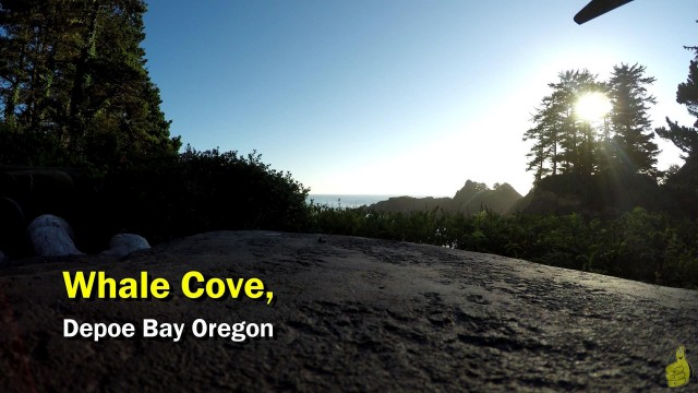 Gamebreak: Whale watching in Whale Cove Oregon / Whalehouse.org – HTG